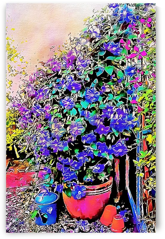 Clematis and Garden Pots by Dorothy Berry-Lound