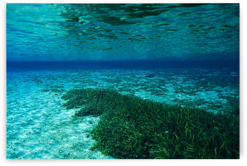 Swaying Seagrass by Alina Myers
