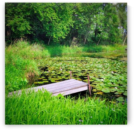 Dock & Water Lilies by FEEDING COZUMEL