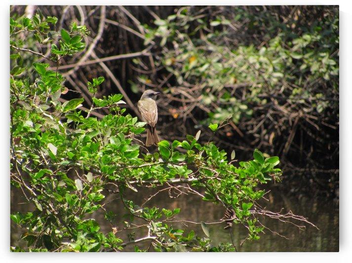 Tropical Bird in Tree by J  Jasmyn Phillips