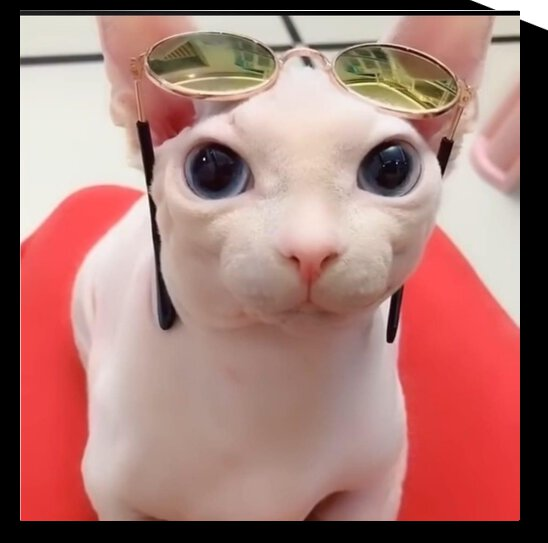 My cat with glasses looks so cute by Gui