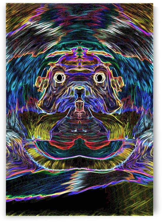 Wise Dog by B Madi