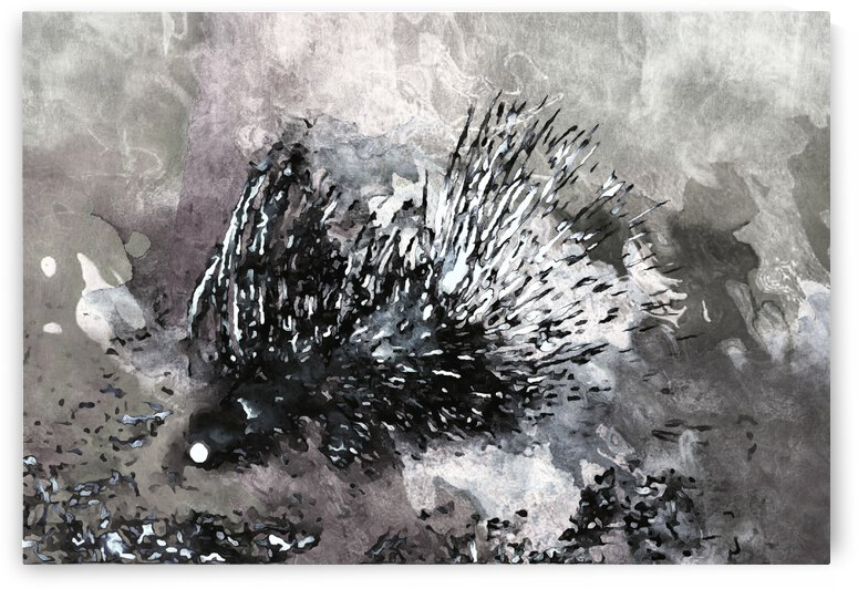 A Porcupine Emerges by Dorothy Berry-Lound