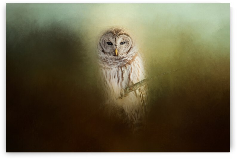 In The Quiet by Michel Soucy