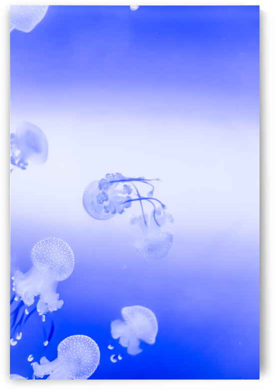 Jellyfish by Monophoto