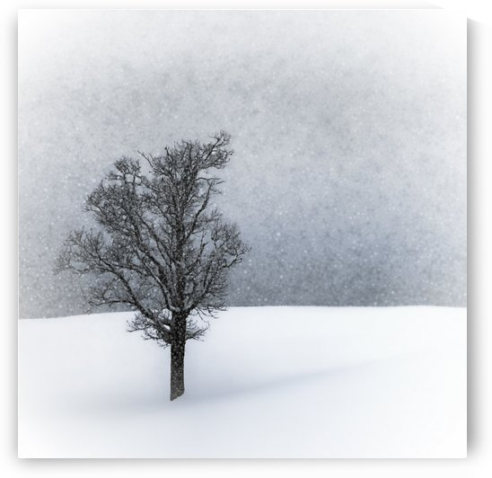 LONELY TREE Idyllic Winterlandscape by Melanie Viola