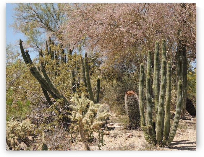 Cactus Garden by J  Jasmyn Phillips