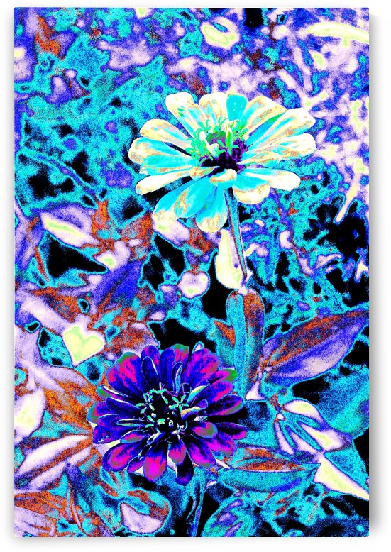 Abstract Zinnias by Matthew Ulisse