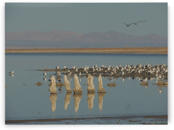 The Salton Sea by J  Jasmyn Phillips