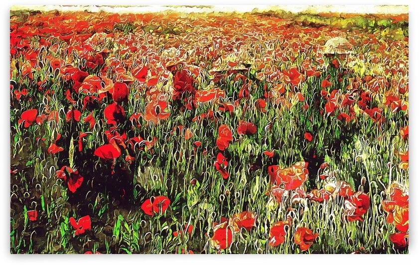 Hidden in the Poppy Fields by Dorothy Berry-Lound