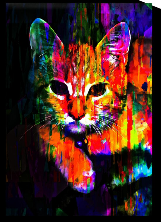 Colourful Kitty by Dorothy Berry-Lound