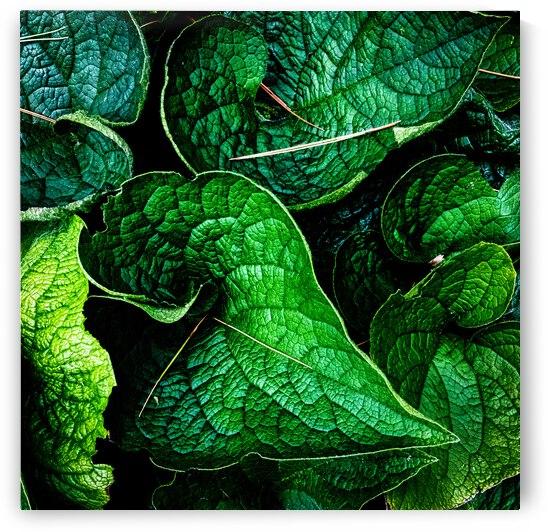 Garden Leaves by Bob Orsillo