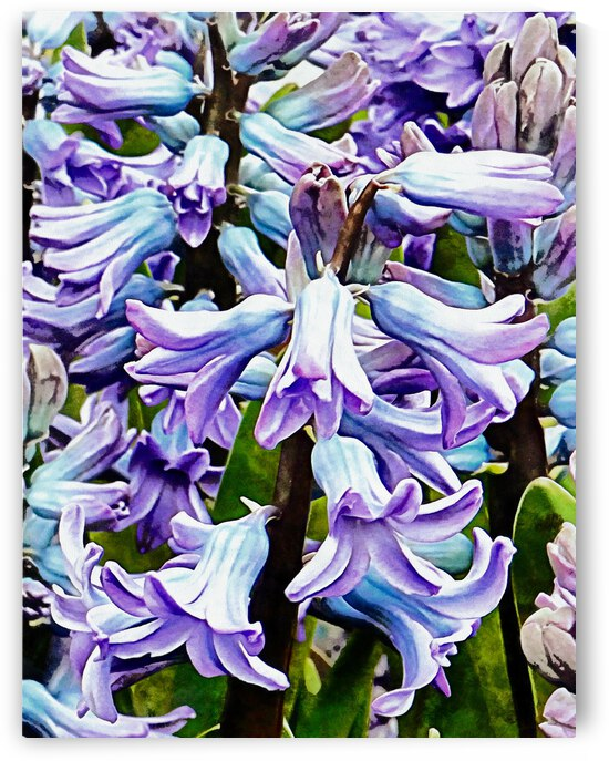 Blue Hyacinth Detail by Dorothy Berry-Lound