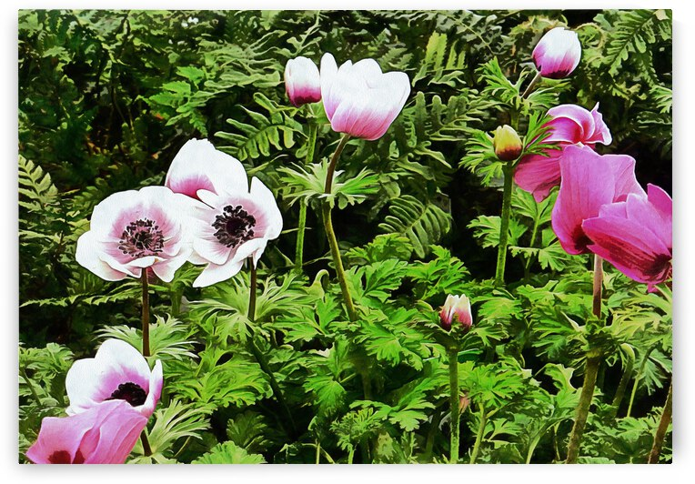 Drifting Pink Anemones by Dorothy Berry-Lound