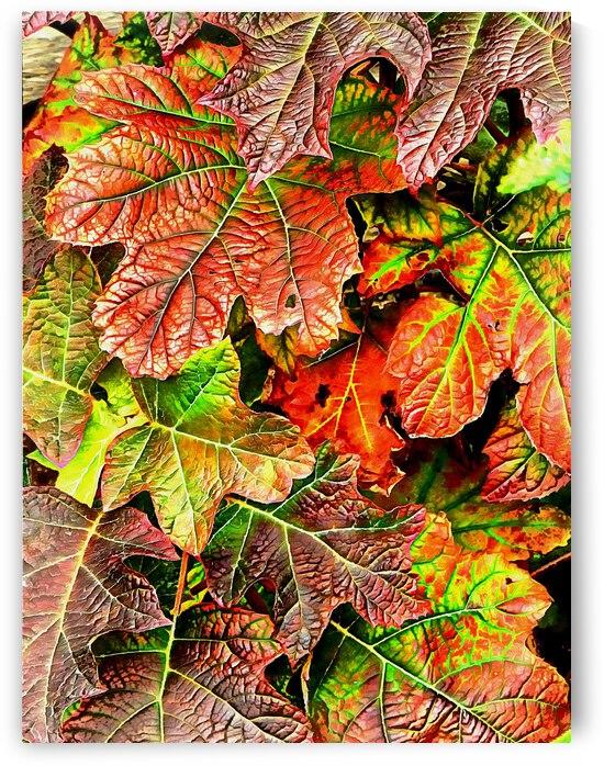 Oak Leaved Hydrangea In Autumn by Dorothy Berry-Lound