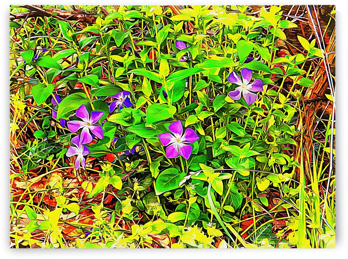 A Periwinkle There Does Tarry by Dorothy Berry-Lound