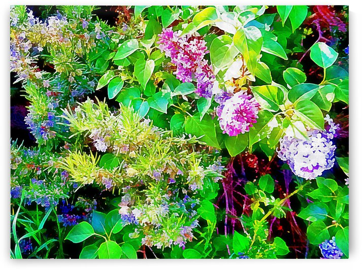 Sunshine And Floral Natural Patterns by Dorothy Berry-Lound