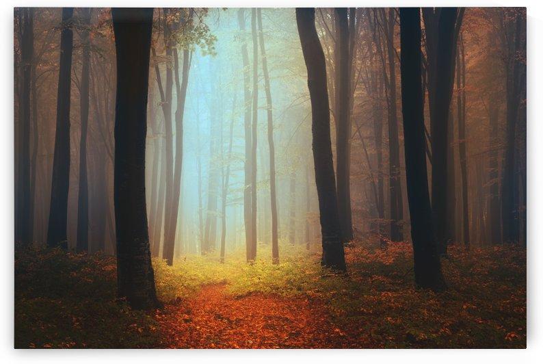 Where fairies live by Toma Bonciu