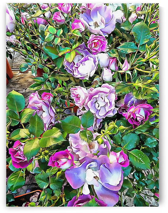 Climbing Lilac Rose by Dorothy Berry-Lound