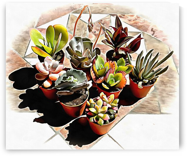 Group of Succulents by Dorothy Berry-Lound