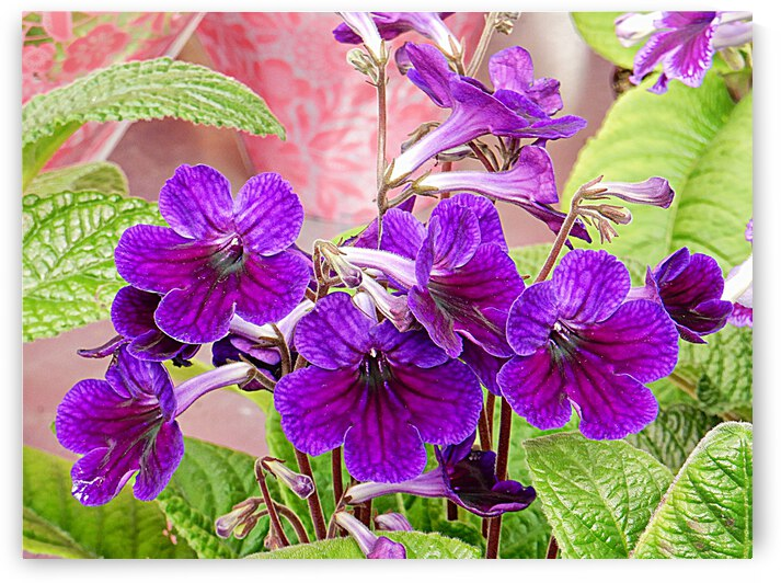 Purple Joy by Dorothy Berry-Lound