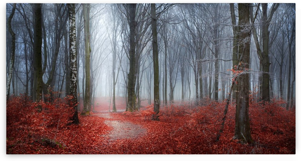 Follow the path they whisper by Toma Bonciu