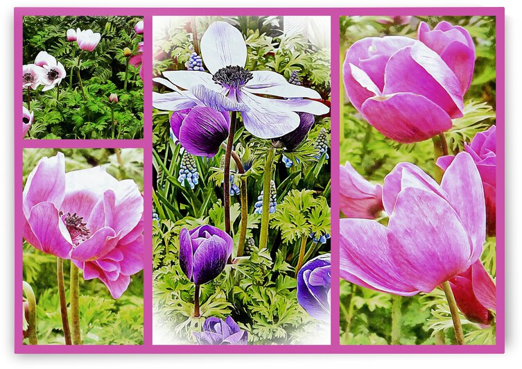 Poppy Anemone Collage by Dorothy Berry-Lound