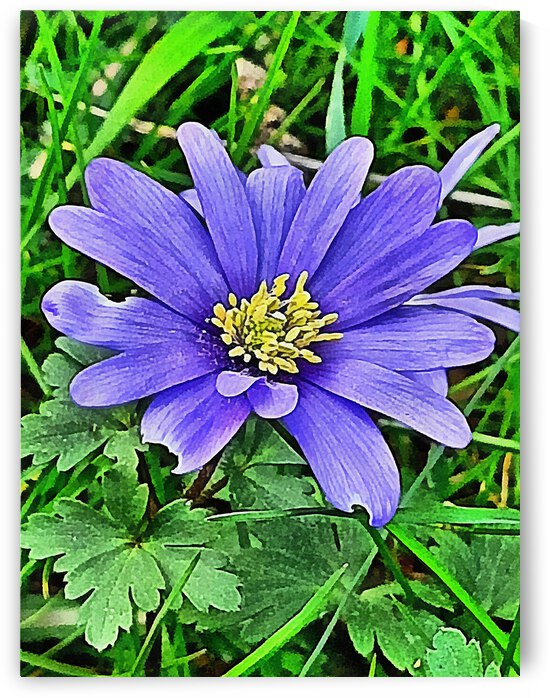 Blue Anemone by Dorothy Berry-Lound