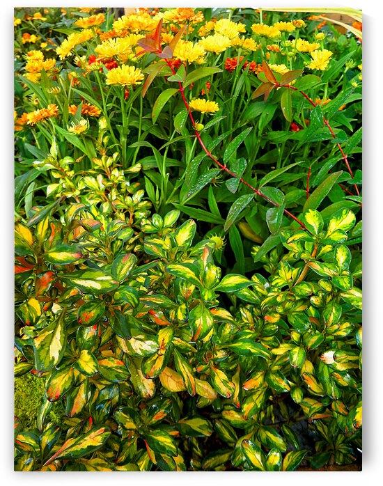 Natures Yellow Abstract by Dorothy Berry-Lound