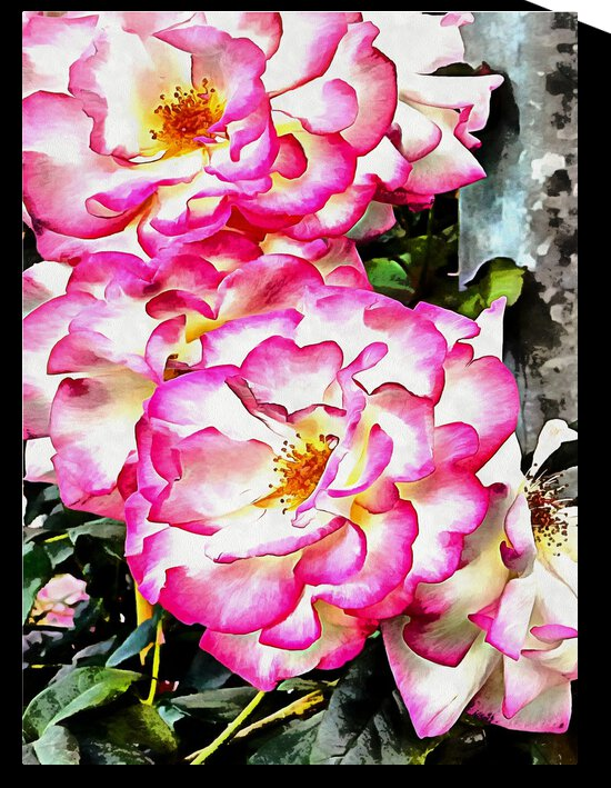 Fluffy Rose by Dorothy Berry-Lound