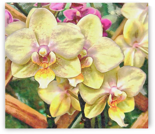 A Flash of Orchids by Dorothy Berry-Lound