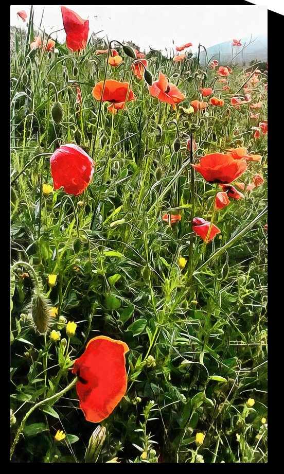 Bright Red Cheery Poppies by Dorothy Berry-Lound