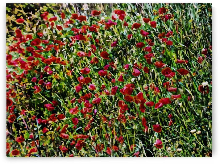 Intense Red Poppies by Dorothy Berry-Lound