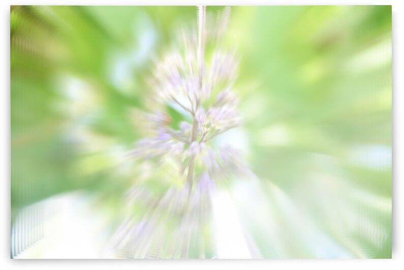 Lilac Explosion by Barbara J Durham Creations