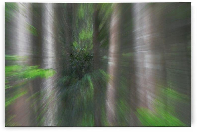 Photo Painting Tree Series  by Barbara J Durham Creations