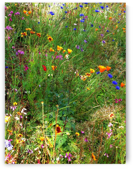 English Cottage Garden Flowers 8 by Dorothy Berry-Lound