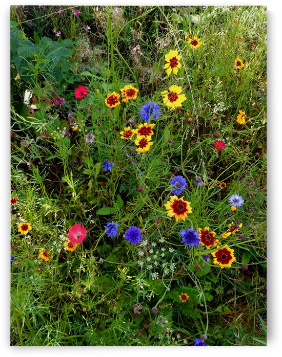 English Cottage Garden Flowers 10 by Dorothy Berry-Lound