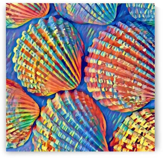 Shells_IMG 2876 by Darrell L Foltz