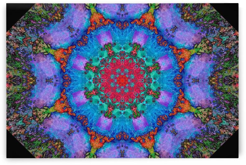 Barnie Paw Prints Kaleidoscope 3 by Dorothy Berry-Lound
