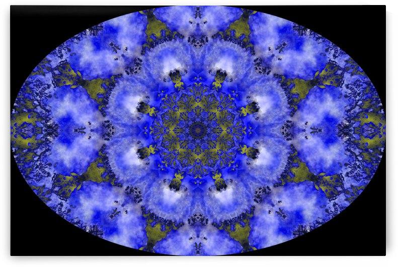 Barnie Paw Prints Kaleidoscope 11 by Dorothy Berry-Lound