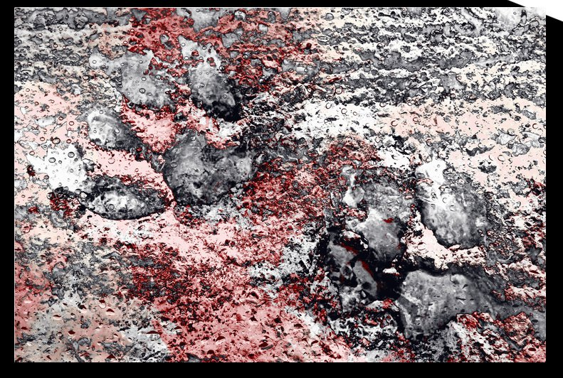 Paw Prints in Grey and Red by Dorothy Berry-Lound