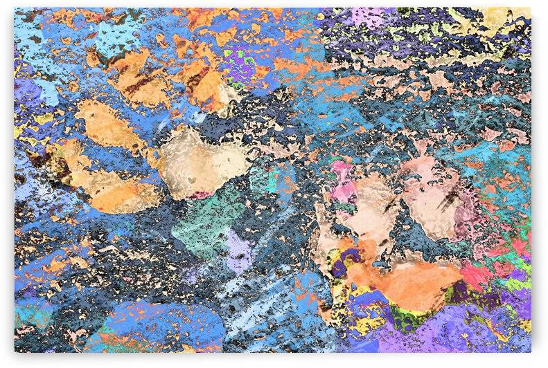 Paw Prints Orange Pads by Dorothy Berry-Lound