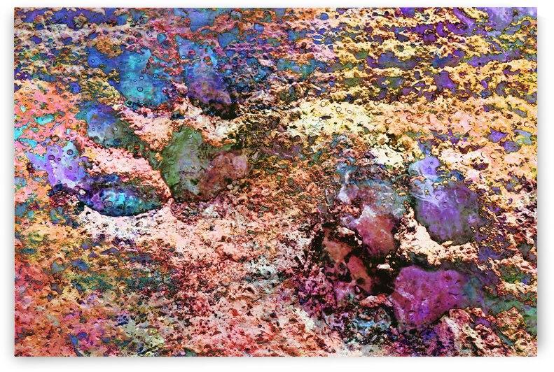 Paw Prints Pretty by Dorothy Berry-Lound