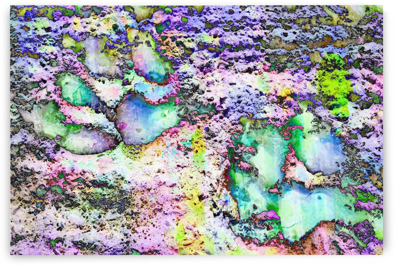 Paw Prints Vibrant Colours by Dorothy Berry-Lound