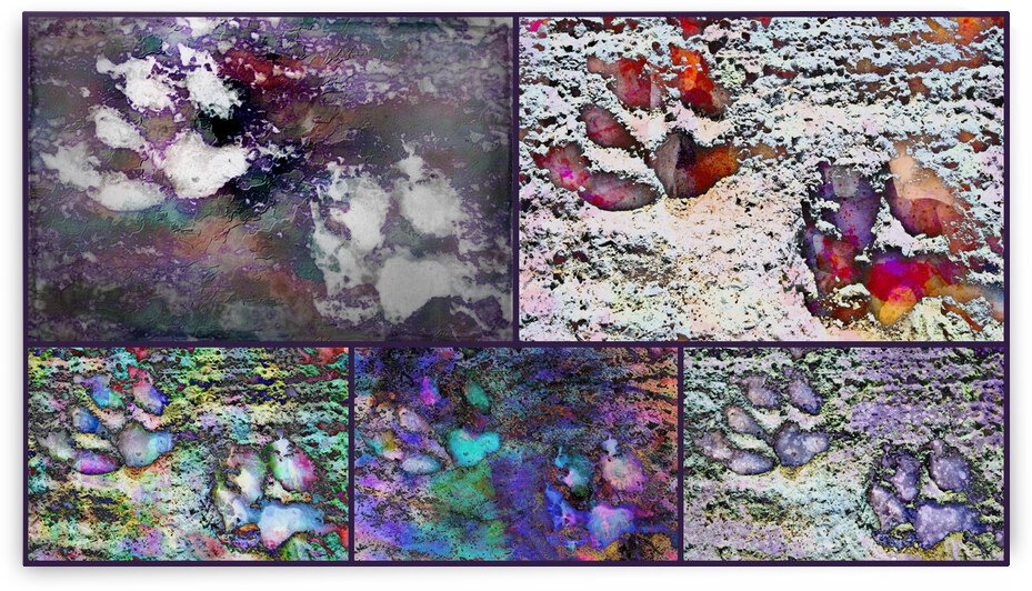 Purple Paw Prints Collage by Dorothy Berry-Lound