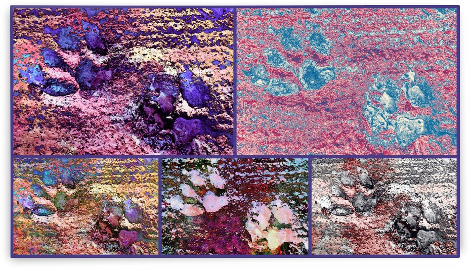 Pink Paw Prints Collage by Dorothy Berry-Lound