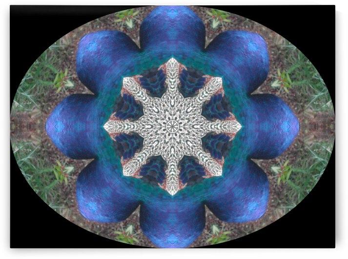 Garden Kaleidoscope by Dorothy Berry-Lound