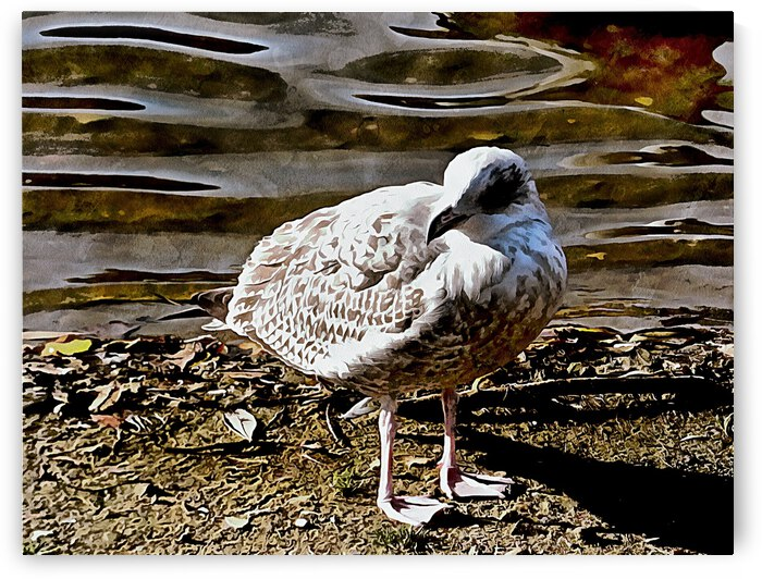 Portrait of a Young Seagull by Dorothy Berry-Lound