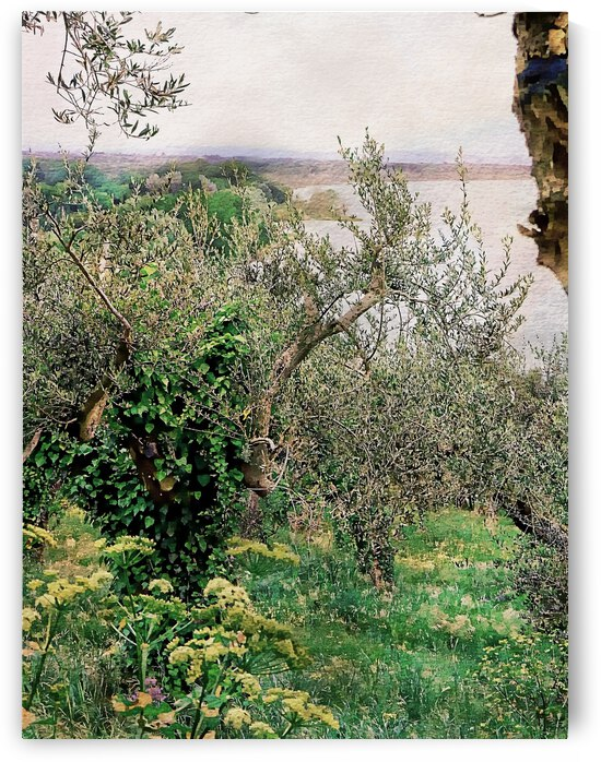 Through The Olive Groves to Lago Trasimeno by Dorothy Berry-Lound