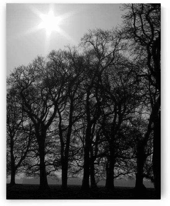 Trees in the Phoenix Park, Dublin, Ireland by Tara K